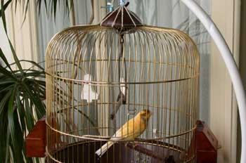 """""""Canario dentro de una jaula"""""""
