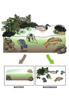 Componentes ecosistemas