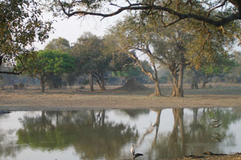 Parque Nacional South Luangwa, Zambia
