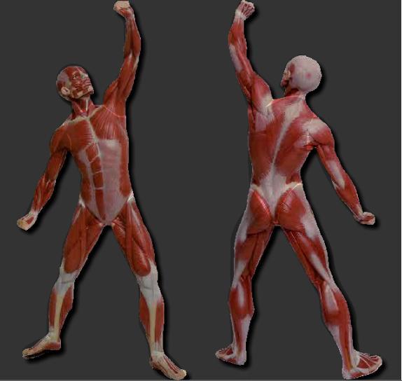 http://ntic.educacion.es/w3///eos/MaterialesEducativos/mem2007/nuestro_cuerpo_clic/interactiva/index.html