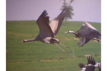 Día Europeo de las Aves