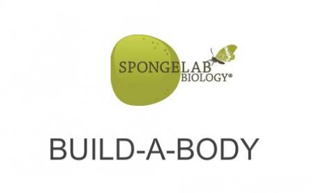 Construir el cuerpo humano