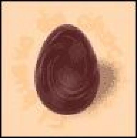 huevo de chocolate