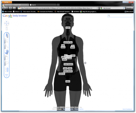 Body Browser