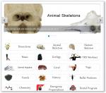 Detalle de la web