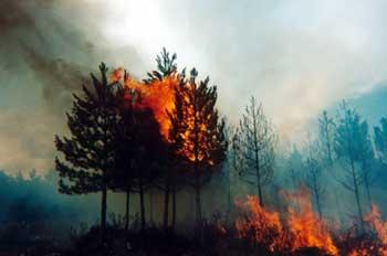 incendio h2436_m.jpg